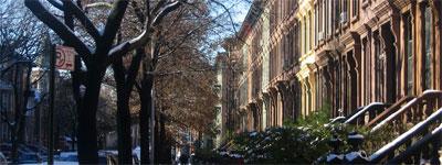nyc-trees1