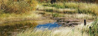 wetland1