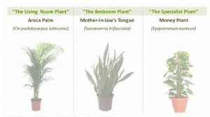 plantscleanair