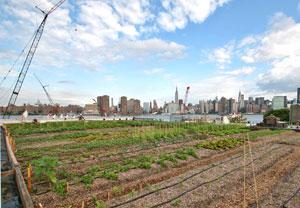 rooftopfarm