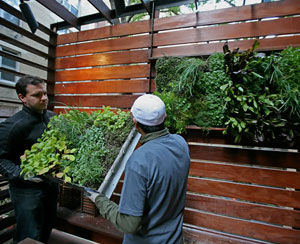 Edible Walls Grow In Popularity Smart Cities Dive