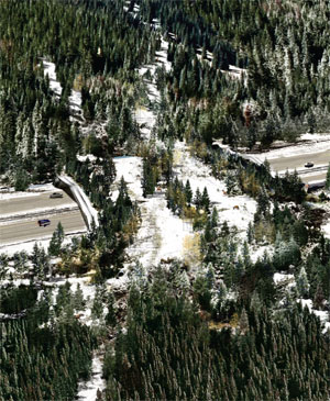 Wildlife crossings can be designed to be safer for humans and animals