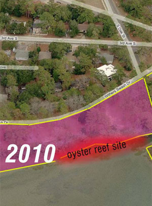 Oyster reefs a cheaper and more effective way to clean coastal waters