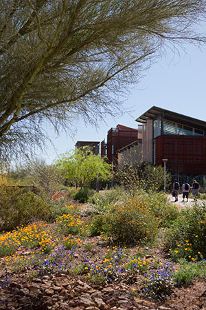 Image-1-Arizona-State-University-Polytechnic-Campus
