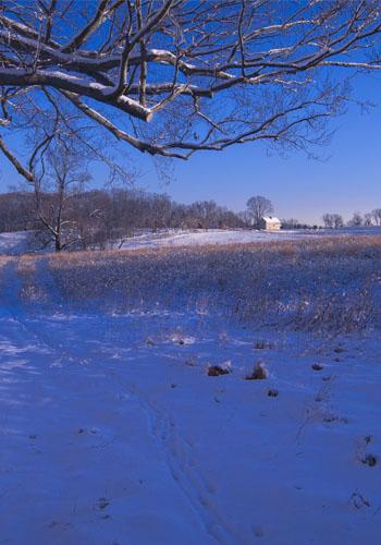2. Meadow Garden Winter