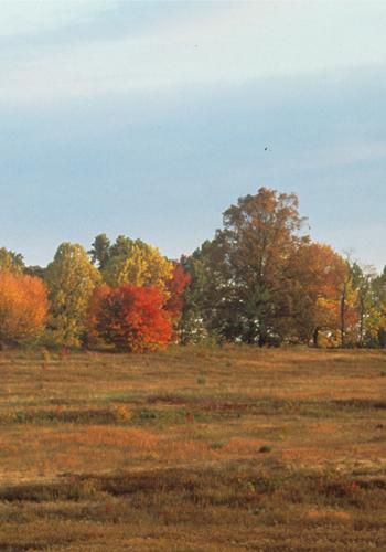 7. Fall Meadow