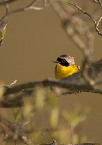 8. Spring Bird