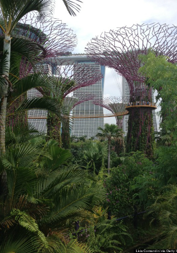 Gardens by the Bay: Singapore / Livia Comandini, Getty Images