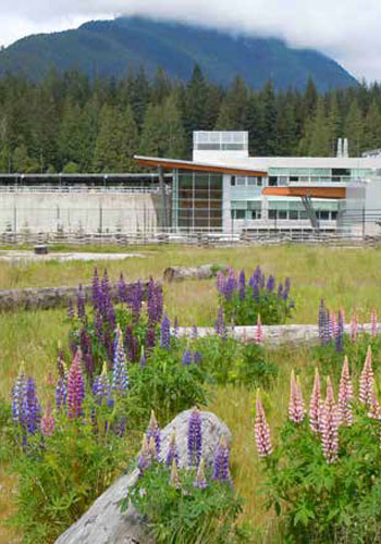 Vegetated Architecture: Seymour-Capilano Filtration Plant in Vancouver, BC (Sharp & Diamond Landscape Architecture Inc.) built a vegetated roof over a new metropolitan water filtration plant linking up with the local recreation system. Lupine, a common early successional species in the Pacific Northwest, adds color and improves the soils. Along with woody debris and other meadow species, the site recreates the early successional meadows and shrublands that are estimated to have once covered up to 35 percent of the Pacific Northwest landscape. / Sharp & Diamond