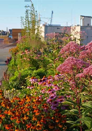 pollinator-path