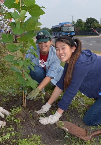 Volunteers plant trees along a highway in Austin, Texas / TreeFolks