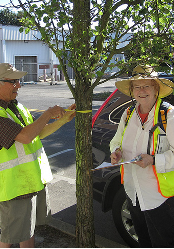 Urban forestry volunteers in Portland, OR / City of Portland