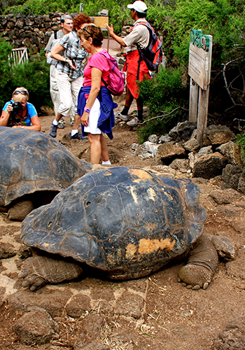 Visitors to the Galapagos Islands view the endangered Galapagos tortoise, one of the biggest tortoises in the world / GalapagosIslands.com