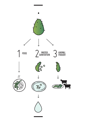Diagram explaining the multiple uses of nopale cacti in the project / Ali Chen via Archinect