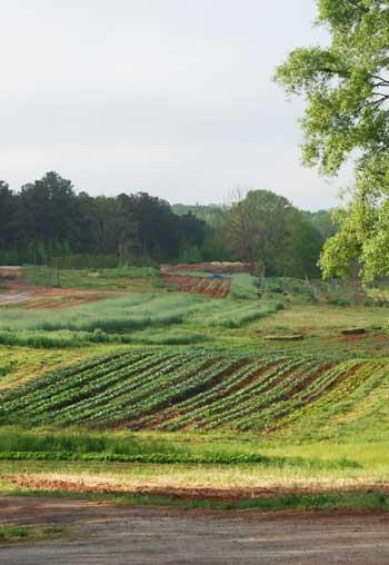 Serenbe organic farm / Serenbe