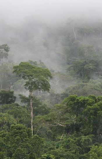 Cloud over Peruvian segment of the Amazon rainforest / Wendeeholtcamp.com