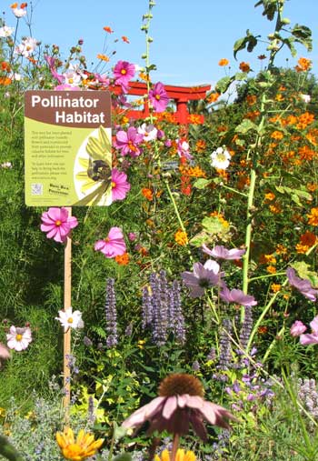 Pollinator Garden  Celeste Ets Hokin Design with Every Bee in Mind THE DIRT