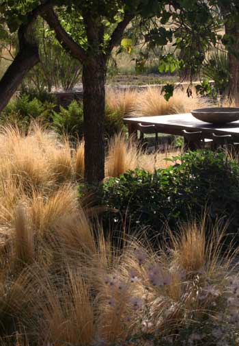 Interview with christine ten eyck on the beauty of drought for Ten eyck landscape architects