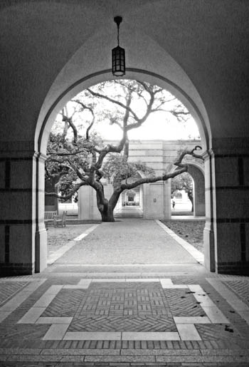 A Tree Campus, Rice University / Carol Ciarniello