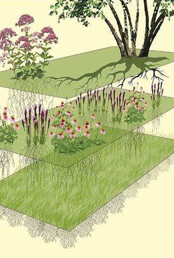 Designed plant communities / Thomas Rainer and Claudia West
