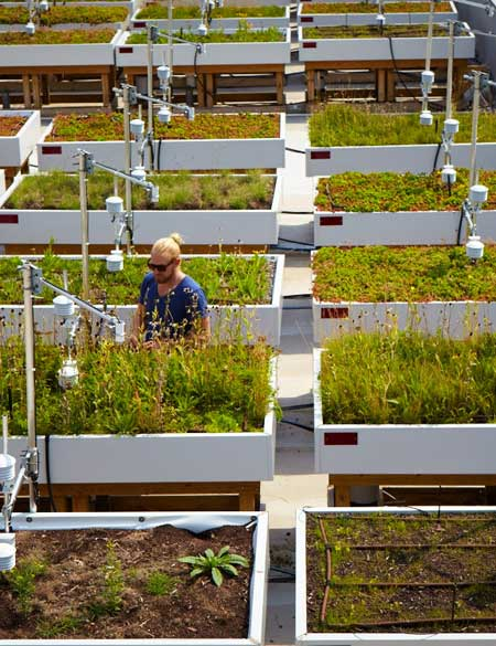 Green Roof Innovation Testing Laboratory (GRIT Lab) / Sandy Nicholson, University of Toronto Magazine
