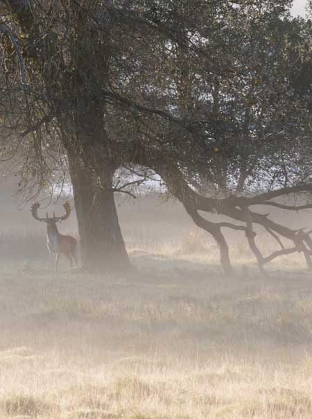 Deer on Rutting Stand (cropped) / copyright Derek Saint Romaine