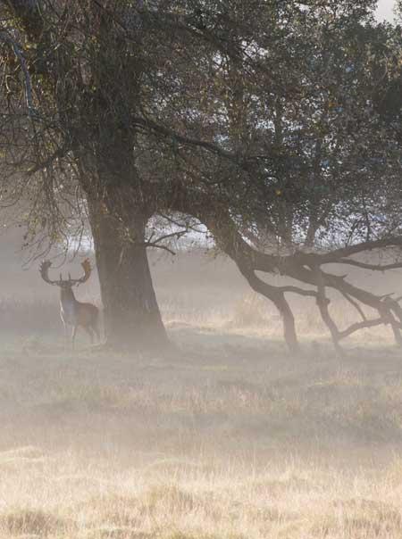 Deer on Rutting Stand (cropped) / copyright Derek Saint Romaine