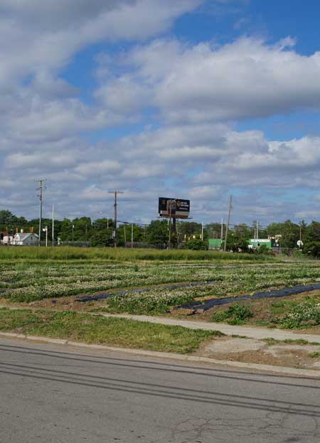 Urban farm, Detroit / Jared Green