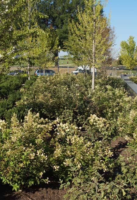 south side rain garden / Jared Green