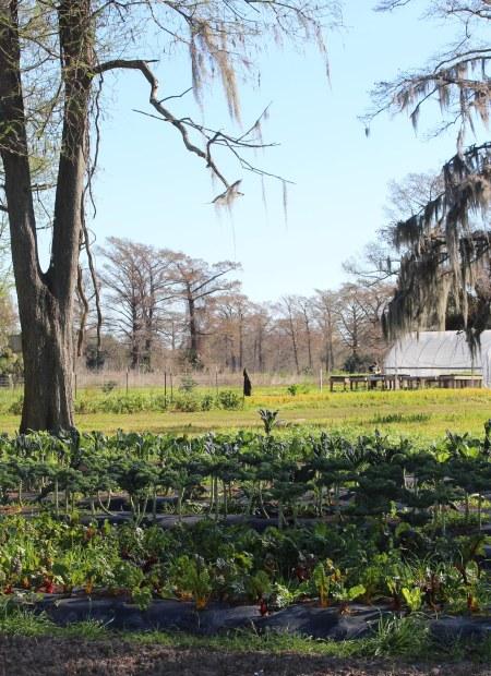 Garden Plots / Grow Dat Youth Farm