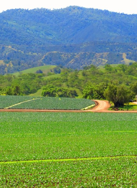 Agricultural Fields at Paicines Rangh / The Sustainable Sweet and Savory Gourmet