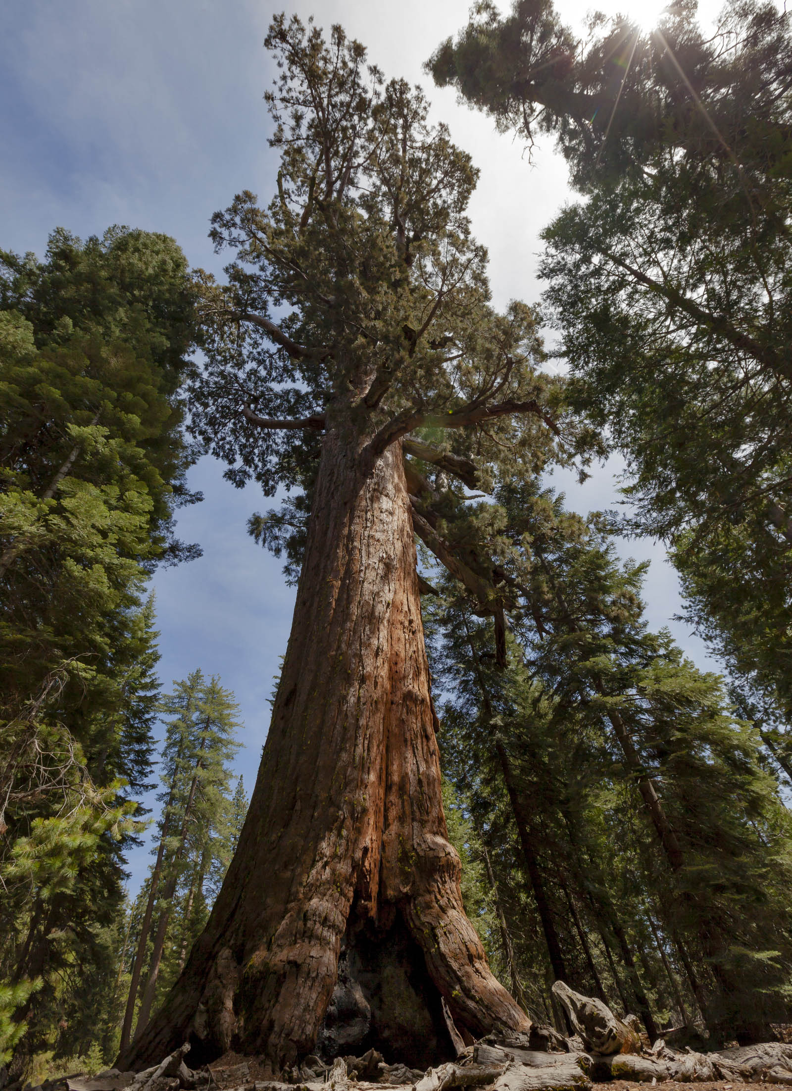 the importance of wildfires in the sustainability of yosemite national park These fires may also have played an important role in hectare region of the yosemite national park including the scientific american is part.