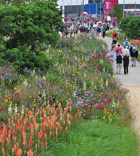 Sowing Beauty: A Guide to Designing Meadows – THE DIRT