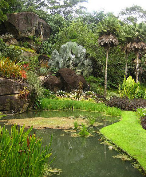 Roberto Burle Marx Takes Over The New York Botanical Garden The Dirt