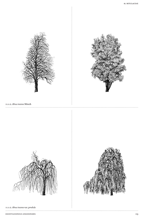 Book Review: The Architecture of Trees