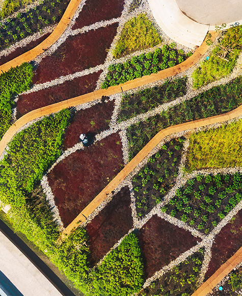 Asia's Largest Urban Rooftop Farm Is a Model of Integrated Design
